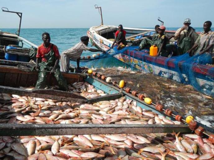 استنزاف المخزون السمكي يهدد الأمن الغذائي بموريتانيا والسنغال